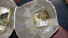 Bizarre Creatures Found Inside Coconut Water Carton #news #alternativenews