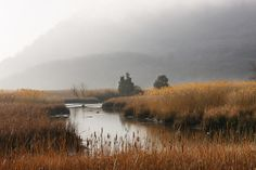 Iona Marsh by Robert Rodriguez Jr., landscape and nature photographer. Located on Iona Island in Rockland County, NY.