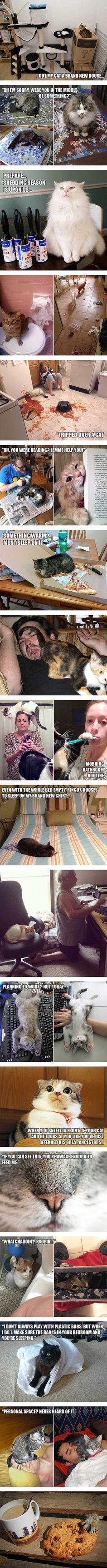 Cat owner struggles