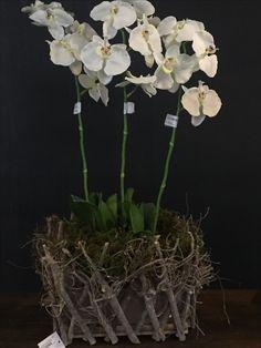 Floral, Plants, Florals, Planters, Flower, Plant, Planting, Flowers