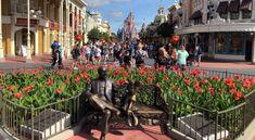 When Will Disney World Go Mask Free?