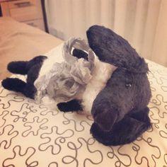 #mishka #handmade #ручнаяработа #игрушкаручнаяработа #мишкатедди #мишкаручнойработы #собака #такса #мишаня #bearteddy #teddy #bear #одеждадлятедди #одеждадлямишек