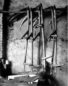 Paul Strand, The Scythes, Luzzara, Italy, 1953 Straight Photography, Line Photography, Photography Lessons, Famous Photography, Landscape Photography, Alfred Stieglitz, Jonathan Crane, Street Portrait, Contemporary Photographers