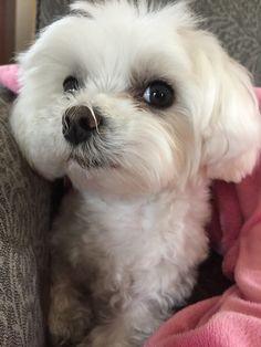 Effie the dog