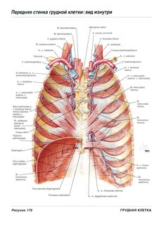 Axial reconstructions showing the pulmonary veins (blue arrows) as ...