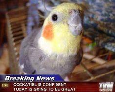 Výsledok vyhľadávania obrázkov pre dopyt bird meme