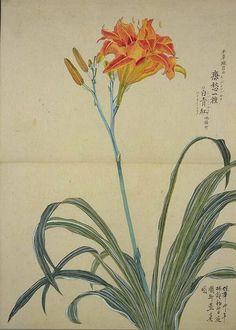 秋色波连波的相册-梅园百花画谱(二)——夏の部