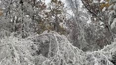 Fall Snow Storm, branch explodes - YouTube Snow, Park, Youtube, Outdoor, Outdoors, Parks, Outdoor Games, The Great Outdoors, Youtubers