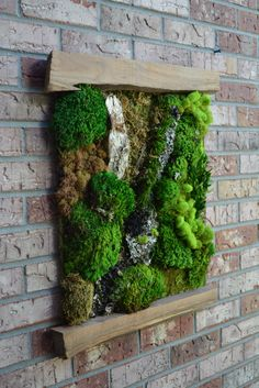 Living Moss Wall Art by BarnwoodBlooms on Etsy Moss Wall Art, Moss Art, Moss Garden, Garden Art, Yoga Spaces, Moss Decor, Vertical Garden Wall, Green Wall Art, Courtyards