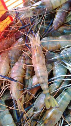 Science Behind Shrimp aquaponics