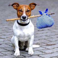 Truques para o cãozinho não sentir muito a falta do dono nas férias | eHow Brasil