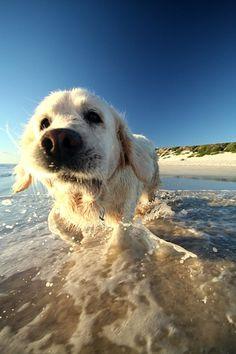 Going Coastal  Loves the beach :)