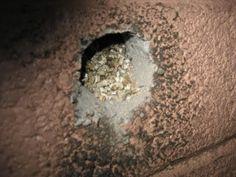 #Vermiculite Insulation & #Asbestos Hazards