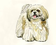 Items similar to Shih Tzu Dog Drawing Pet Illustration Pen and Ink Watercolor Gift Idea Wall Decor Pet Portraits giclee print Memorial Ivory Gray Black on Etsy