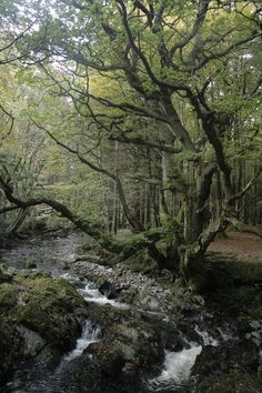 Tollymore: a magical forest. Northern Ireland