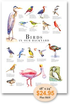 Florida Birds | Gallery Palm Beach | www.palmbeachpost.com A great poster for the porch when checking out the birds