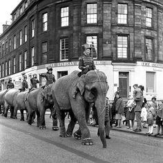 The Elephant Parade - June 1966