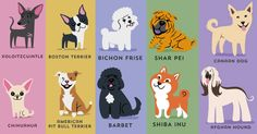 Designer Creates An Adorable Guide To The Dogs Of The World By Geographic Origin- I want to make these into cookies