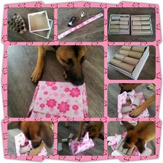 Many photos of various games to play with pups with everyday household items. Homemade Dog Toys, Diy Dog Toys, Brain Games For Dogs, Dog Games, Dog Boredom, Dog Enrichment, Dumb Dogs, Dog Puzzles, Crazy Dog Lady