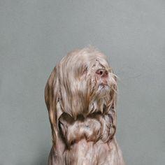 Ein nasser Hund