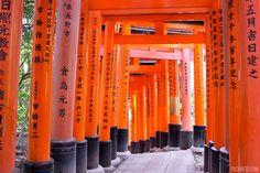 Highlighting what to see and do with 12 days in Japan in the cities of Tokyo, Kyoto, Nara and Osaka.