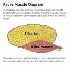 fat v muscle 5 Lbs Of Fat, Fat Vs Muscle, Twerk Out, Muscle Diagram, Trying To Lose Weight, Health Quotes, Lose Fat, Build Muscle, One Pic
