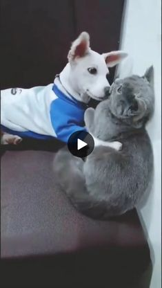 funny cats and dogs compilation. funny animals compilation try not to laugh. funny animals 2019 try not to laugh. Cute Puppies And Kittens, Funny Cats And Dogs, Kittens Cutest, Cute Dogs, Cat And Dog Videos, Funny Animal Videos, Cute Funny Animals, Cool Cats, Best Cat Gifs