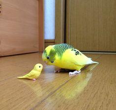 http://ayamebird.tumblr.com/post/140795416350/どなた