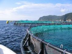 Aquaculture in Newfoundland & Labrador I think I could design something like this for all the ponds in the area...