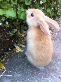 My rabbit Horace looks like something from a storybook