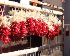 Ristras  Santa Fe, NM - picture courtesy of me @wanderingwyatt