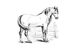 Die 258 Besten Bilder Von Pferde Horses Horse Art Und Horse Cake