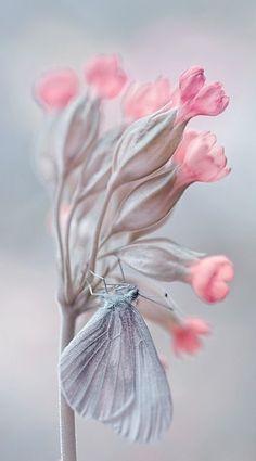 ☆ Photography Byゝ。Magda Wasiczek ☆