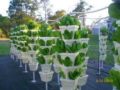 vertical hydroponic farming - growing romaine without soil, manure or chemicals and using a fraction of the space
