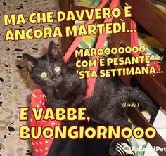 #FbSocialPet augura a tutti voi una buona giornata! gatti_martedì_buongiorno_fbsocialpet