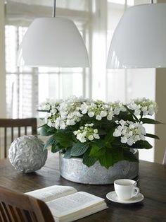 white 'hortensias'