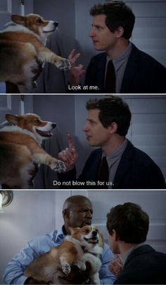 Brooklyn Nine Nine Brooklyn Nine Nine, Brooklyn 9 9, Tv Quotes, Funny Quotes, Funny Memes, Hilarious, Funny Dogs, Best Tv Shows, Favorite Tv Shows
