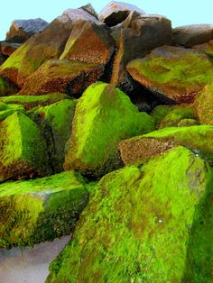 Algae, Rosanne Malusa photo
