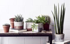 Tee itse kauden trendikkäin sisustusidea: vala betoniruukku helposti kotona. Helpolla ohjeella onnistut varmasti.