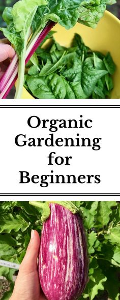 A step-by-step guide to starting your first garden organically.