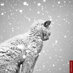 The stray cat ...alone in the snow and the cold needs you ...don't forget him,build him little shelters , give him food.....for Christmas and all the other days .