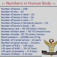 Numbers In The Human Body