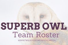 We have at least 19 species of superb owls that touch down in North America. We've selected 11 of them that would make an awesome team. There are many attributes that make owls fascinating and uniq...
