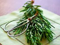 drying herbs in microwave  herb-rosemary