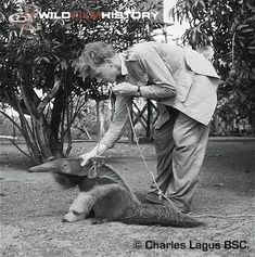 David Attenborough with a giant anteater
