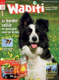 Wapiti N° 339 - Le border collie