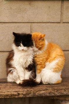 Good friends. So sweet.