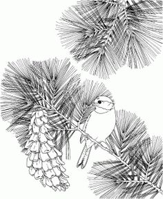 Best Bird Coloring Pages / Flowers and Birds Coloring Books