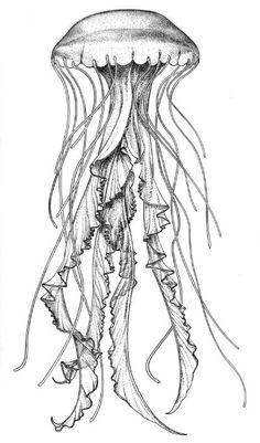 tattoo sketch idea jellyfish jelly