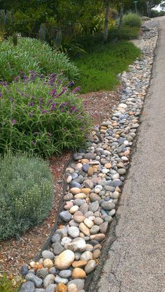 Rocks and hardy, low water shrubs